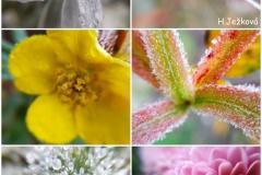 Hana-Ježková-9.B-2020-Zmrzlá-krása-podzimu-naše-zahrada7.11.